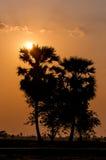 Après coucher du soleil, paume Photographie stock libre de droits