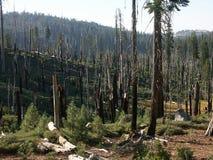 Après incendie de forêt Images libres de droits