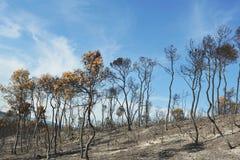 Après l'incendie Photographie stock libre de droits