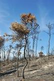 Après l'incendie Photos stock