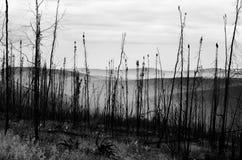 Après l'incendie de forêt photo libre de droits