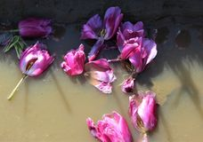 Après la fleur Photos libres de droits