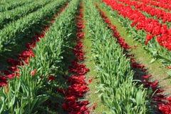 Après la fleur Images libres de droits