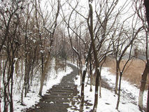 Après la neige Image libre de droits