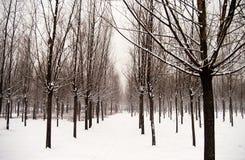 Après la neige Images libres de droits