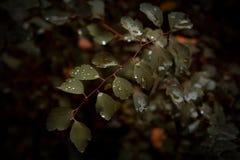 Après la pluie Photographie stock