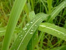 Après la pluie Photos stock