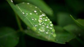 Après la pluie Images libres de droits