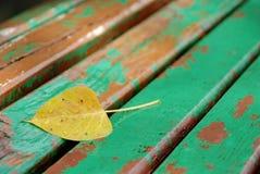 Après la pluie 1 Photographie stock libre de droits