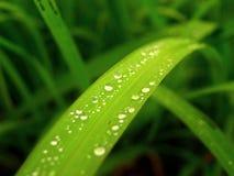 Après la pluie Photos libres de droits