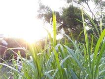 Après-midi d'été Photographie stock