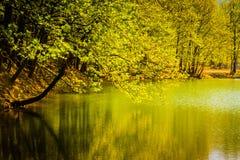 Après-midi de Lakeside Images libres de droits
