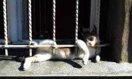 Après-midi paresseux dans la fenêtre photos libres de droits