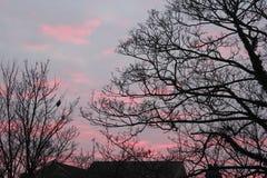 Après-midi rose Photo libre de droits