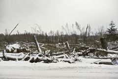 Après ouragan Photo stock