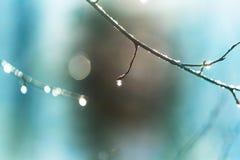 Après pluie photos libres de droits