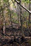 Après un incendie Images libres de droits