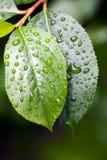 Après une pluie Image stock
