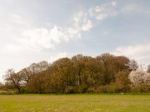 apra il campo di erba con la grande fila del fondo dell'ambiente della natura della molla del blu di cieli dell'albero Fotografia Stock