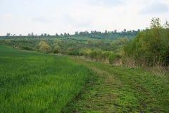 Apra il campo e la strada verdi Fotografia Stock