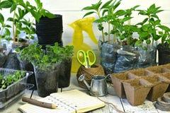 Apra il libro del diario del giardino con le piantine dei fiori della pansé e di balsamine su fondo d'annata Fotografia Stock Libera da Diritti