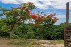 Apra il portone, vista all'albero sgargiante Fotografie Stock