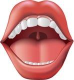 Apra la bocca Immagini Stock