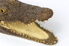 Apra la bocca del coccodrillo Immagini Stock