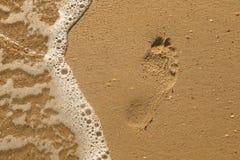 Apra la conchiglia su un Pebble Beach spruzzato dalle spume di un mare Fotografia Stock