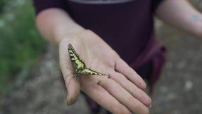 Apra le mani femminili che tengono una farfalla gialla stock footage