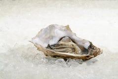 Apra le ostriche Fotografia Stock