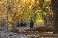 Apreciando a cor do outono foto de stock royalty free