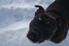 Apreciando a neve imagens de stock royalty free