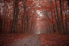 Apreciando o outono colorido foto de stock royalty free