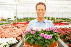 Apreciando o seu trabalho com plantas Foto de Stock