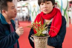 apreciando orquídeas de florescência Foto de Stock Royalty Free