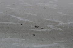Apreciando a praia Fotografia de Stock Royalty Free