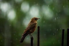 Apreciando a precipitação fotos de stock
