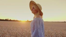 Aprecie o ar fresco, caminhada em torno do campo de trigo no por do sol tiro do steadicam video estoque