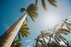 Aprecie o paraíso na ilha tropical do tempo, dias ensolarados de Aruba dos sky's azuis Imagem de Stock