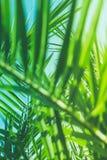 Aprecie um sonho tropical fotos de stock