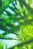 Aprecie um sonho tropical imagens de stock royalty free