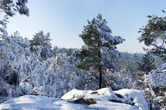 Fontainebleau forest under snow Stock Photos