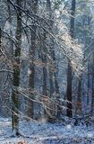 Apremont gorges under snow in the Fontainebleau forest Royalty Free Stock Photo