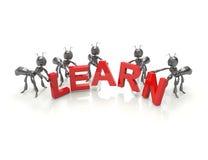 Aprenda formigas dos desenhos animados da equipe -3d Fotos de Stock