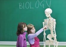 Aprenda la biología en escuela Imagen de archivo libre de regalías