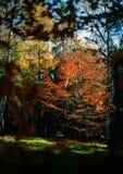 Aprendizagem do outono fotos de stock