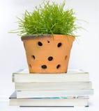 Aprendizagem verde Foto de Stock