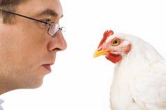 Aprendizaje de la gallina Fotografía de archivo libre de regalías
