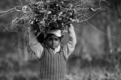 Aprendizaje de la vida Imagen de archivo